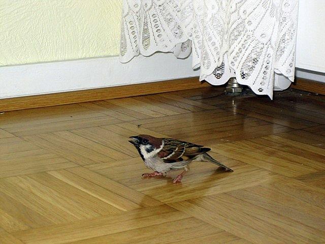 Несколько минут назад на полу у террариума я увидела эту птицу