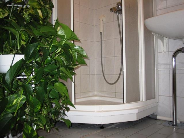 Однако можно мыть цветы в ванной, если есть трап