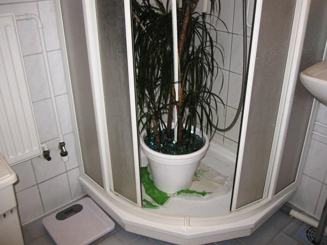 Пальму же мыть легко и быстро, просто поставив ее в душевую кабинку