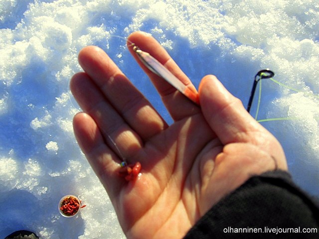 Червяки для зимней и летней рыбалки одинаковые