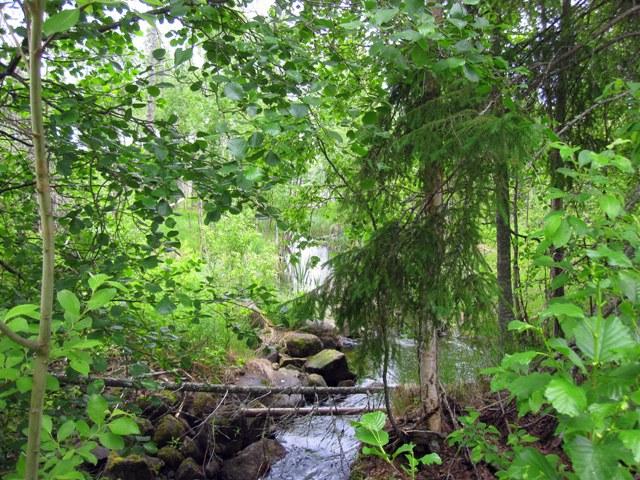 Для нашего озерного и болотистого края