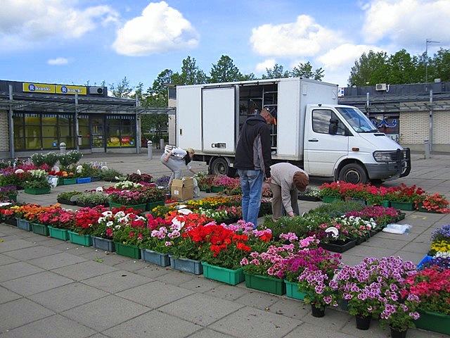 Каждый год мы покупаем цветы на рынке