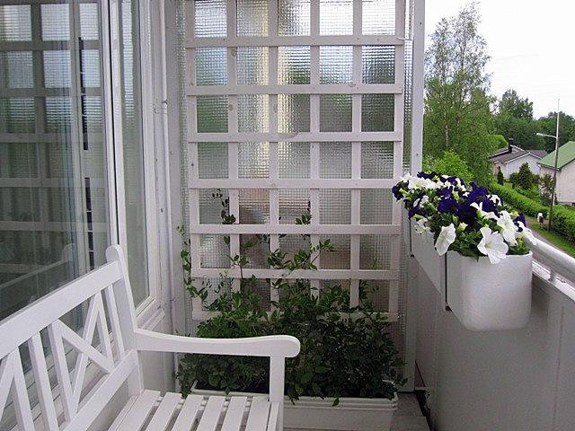 К сожалению, я опять забыла название цветов, которые вьются по балконной решетке