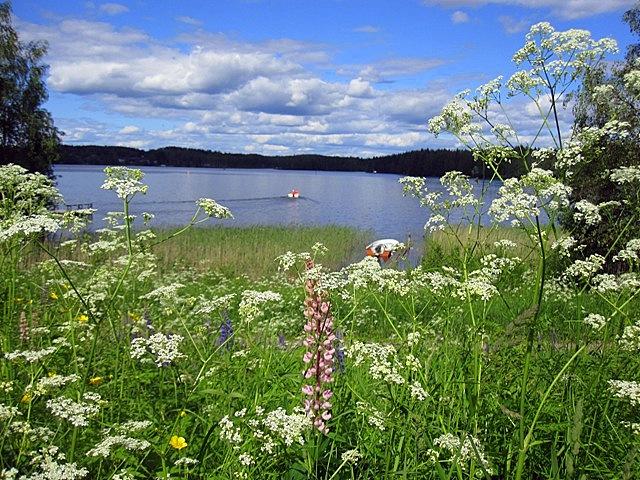 Праздник Юханнус в Финляндии настолько любят, что с 1934 года он является официальным