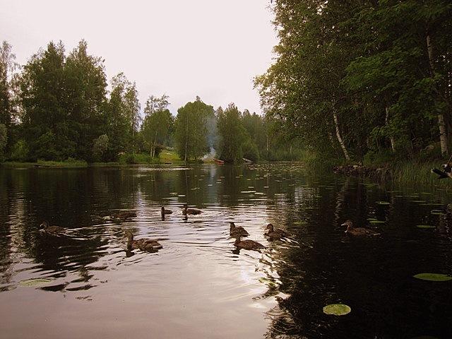 ducks lake