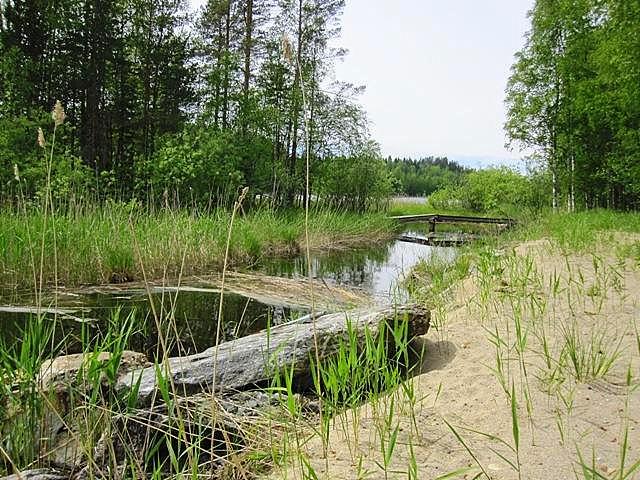 берег и мост летом