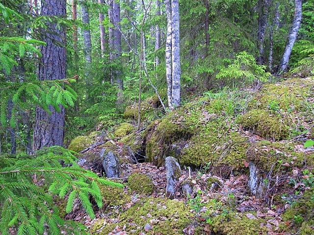 лес вокруг дома