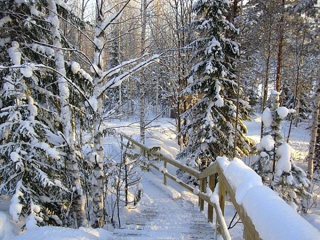 спуск из дома в сауну зимой