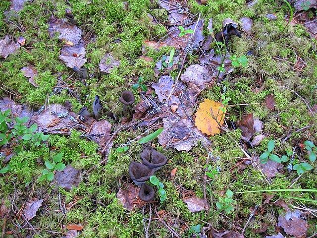 По склонам гор растут чудесные грибы