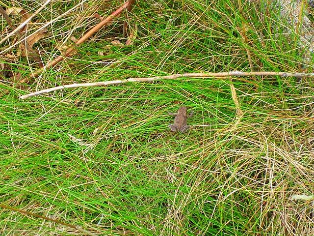 Из животных по дороге нам встретился только лягушонок