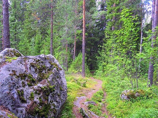 мимо камней в темный лес