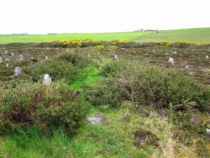 желтые цветы в Hill O Many Stanes