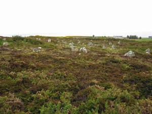 коричневая трава Hill O Many Stanes