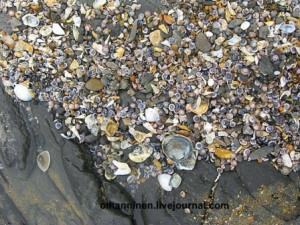 Галька и ракушки на прибрежных скалах