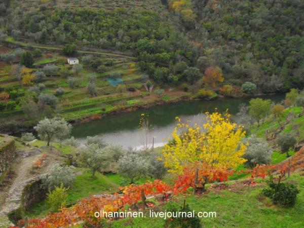 виноградники вдоль русла Дору