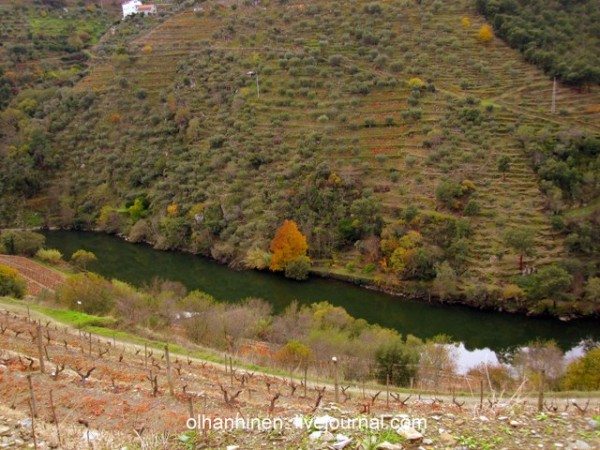 зеленая вода Дору