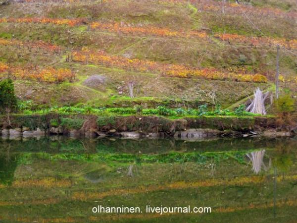 зеркальное отражение виноградников в воде Дору