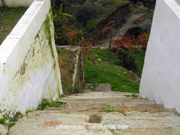 старинные ступени ведут на виноградник