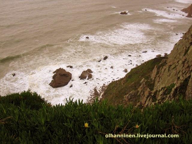 взгляд вниз на прибрежные скалы и цветок