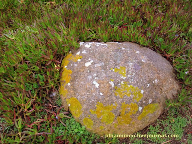 заплесневелый камень на Кабо да Роко
