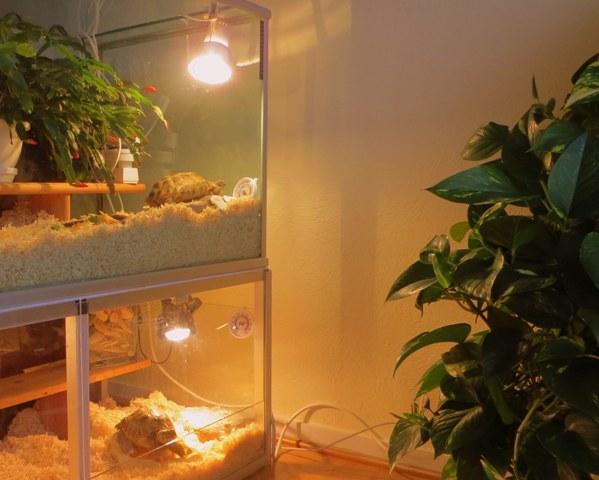 лесные кактусы