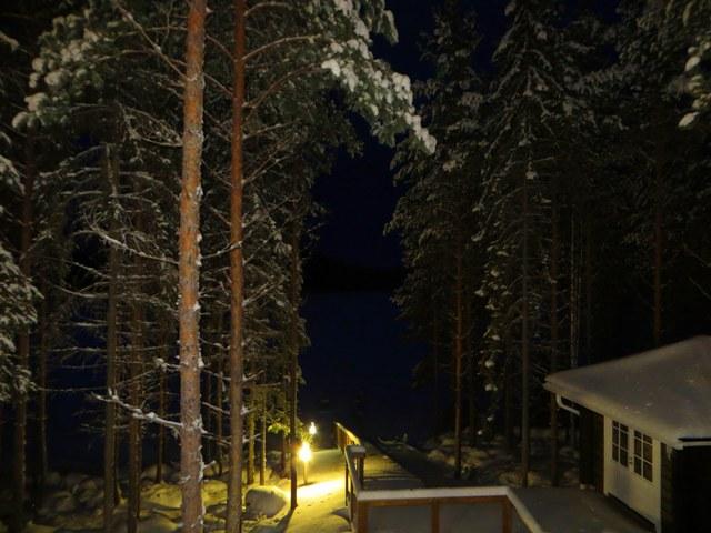 ночь и дерево, где рысь