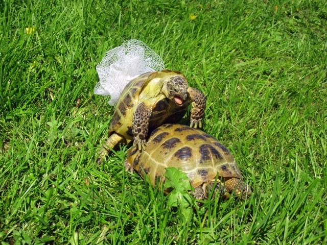 черепахи и секс