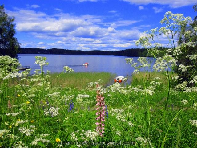 летние цветы у озера