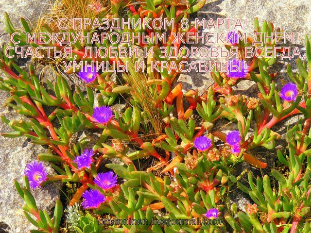 цветы с острова кенгуру