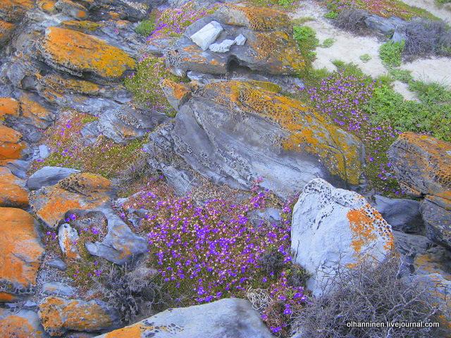 пупырчатые камни и розовые цветы