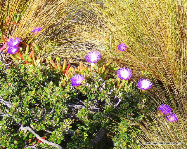 розовые цветы и желтые веера
