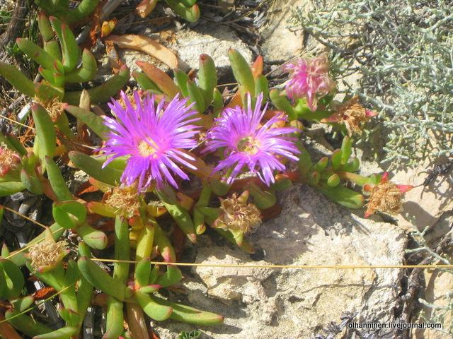 розовые цветы и зелено-белые ветки