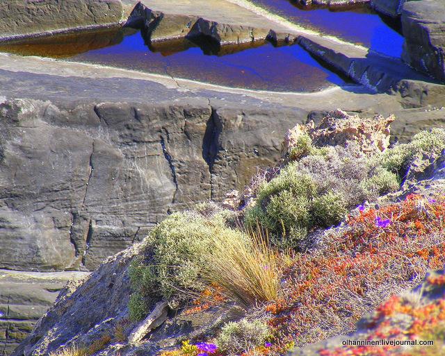 скала с водой и розовыми цветами