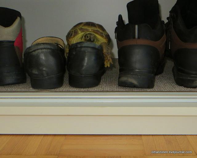 черепаха залезла в шкаф