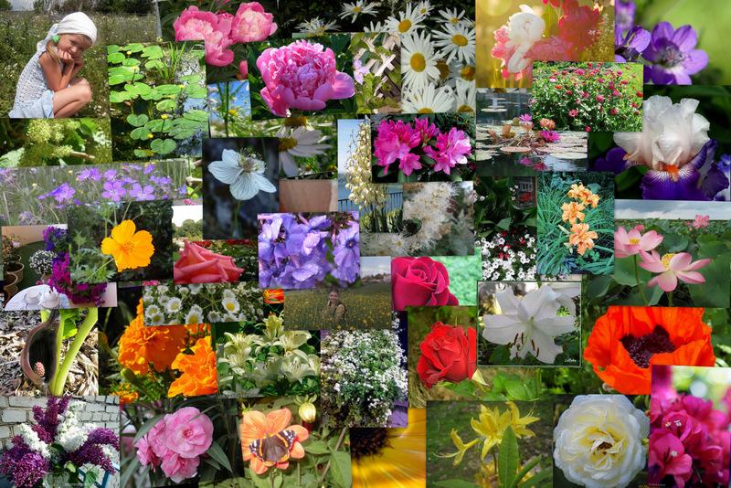 весь зимний конкурс летних цветов