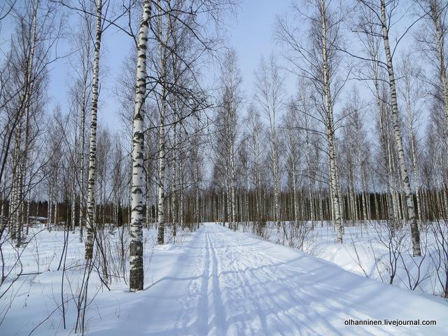 04-засыпанная лыжня в березовом лесу и мало лыжников