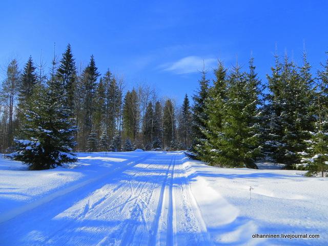 11-лыжня в смешанном лесу