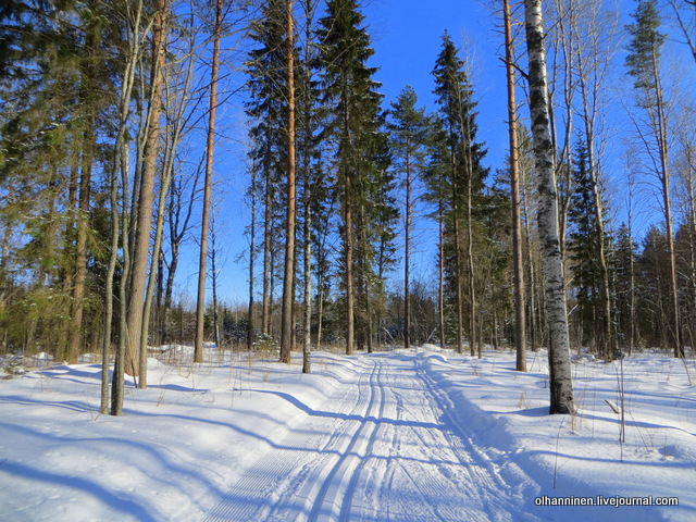 12-лыжня в лесу