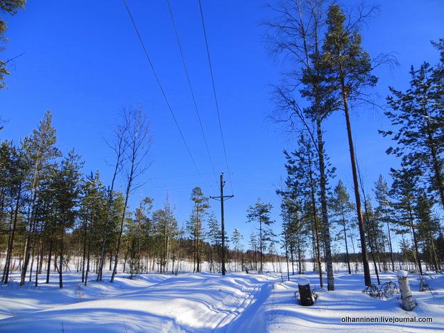13-лыжня из леса на озеро