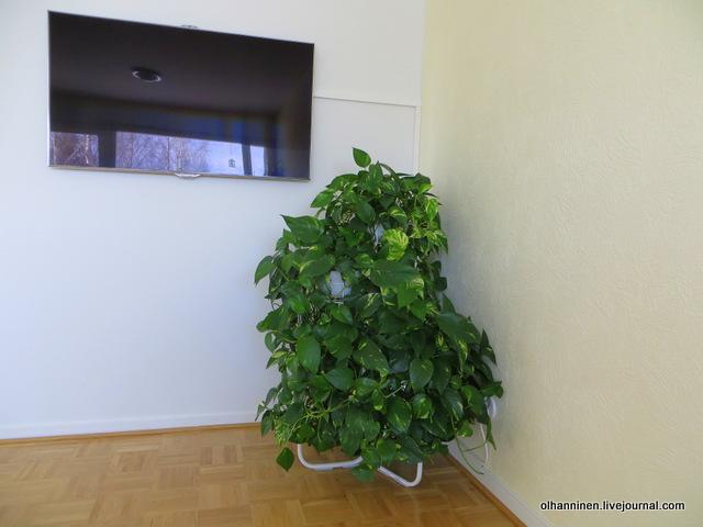 01-розетку для телевизора в гостиной закрывает цветок