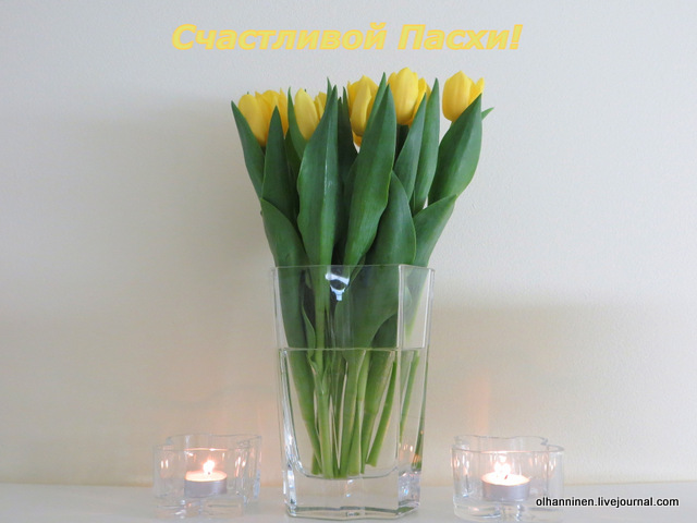 01-тюльпаны
