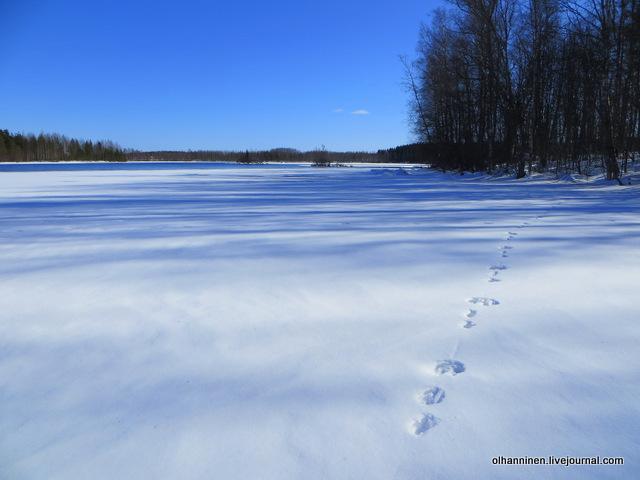 03 следы зверя на снегу