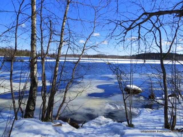 4 нет никого из лебедей на моем месте на озере Уннукка