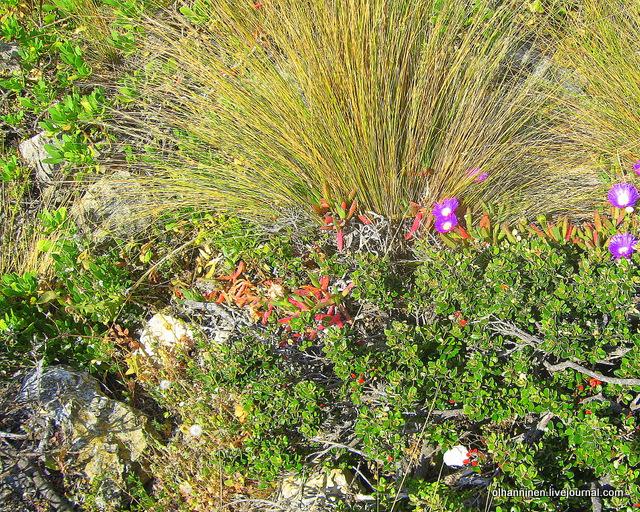 рыжие высохшие веера,  розовые цветы и кустарники с черными ветками