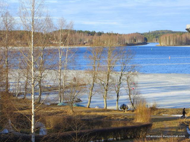 лебеди на краю льдины