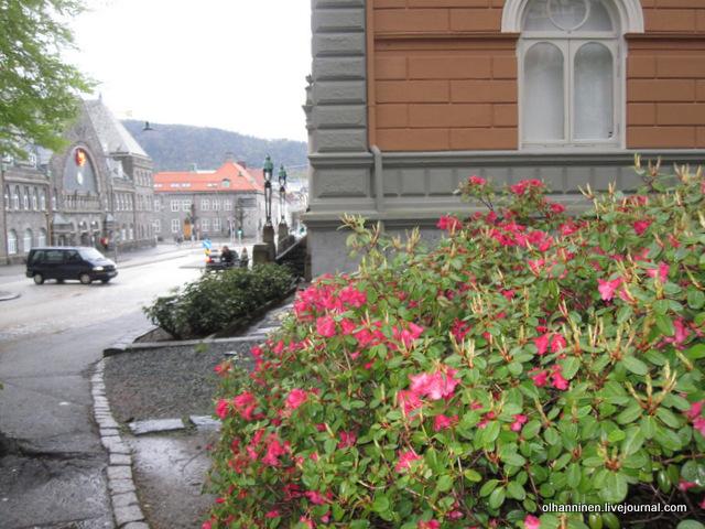 яркие розовые цветы напротив вокзала