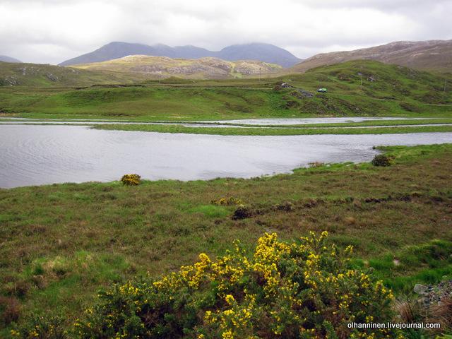 дрок на шотландском речном побережье