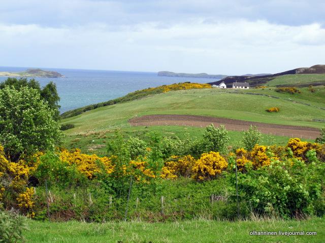 желтые цветы как граница полей и домик вдалеке