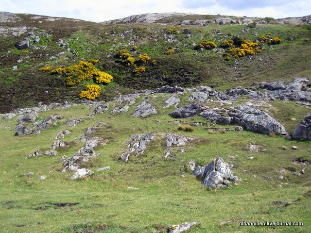 цветы в серых скалах