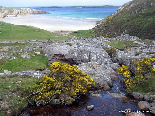 цветы на побережье Шотландии